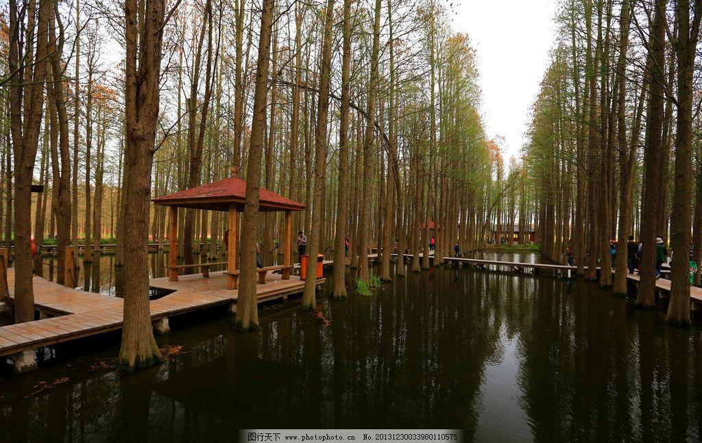 李中水上森林图片