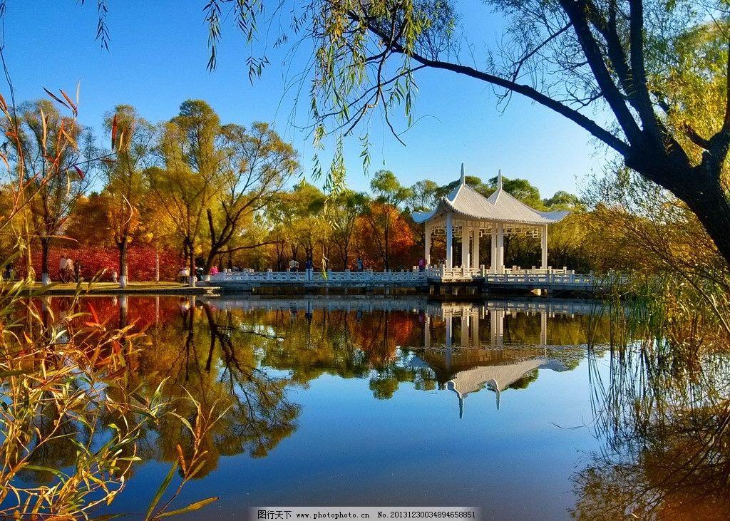 哈尔滨 太阳岛 风景壁纸 风景图片 国内旅游 风景区 唐代古槐树