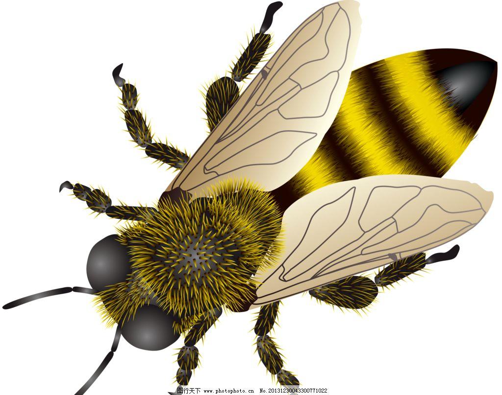 手绘蜜蜂图片_ppt图表_ppt_图行天下图库