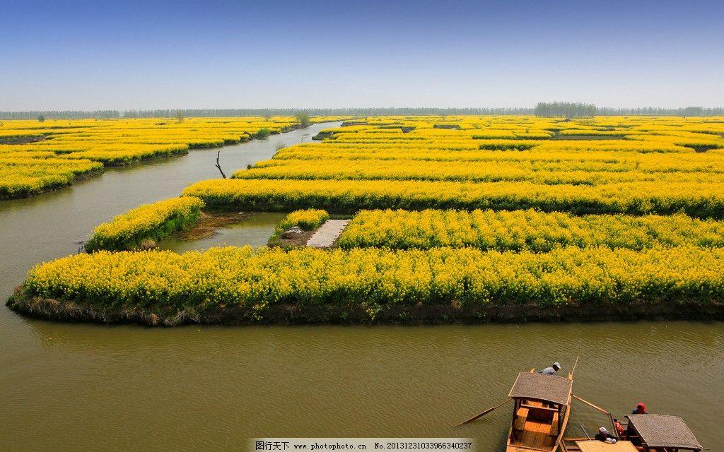 千岛菜花风景区图片