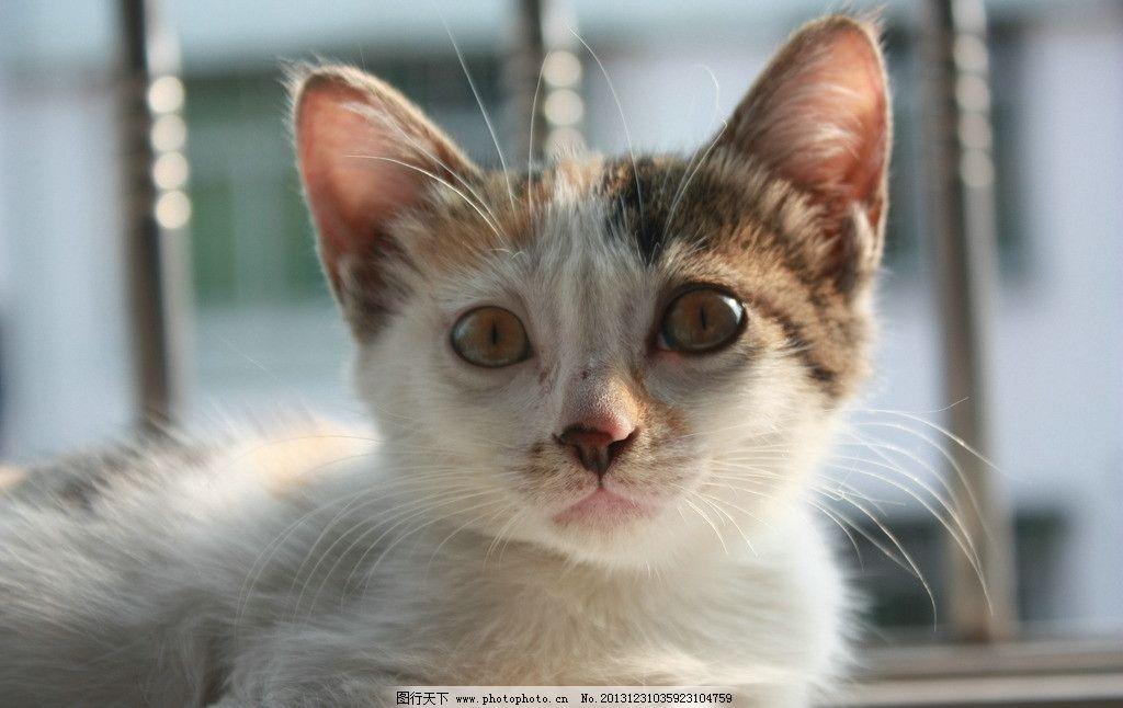猫咪 晒太阳 家猫 阳台 萌 家禽家畜 生物世界 摄影 72dpi jpg